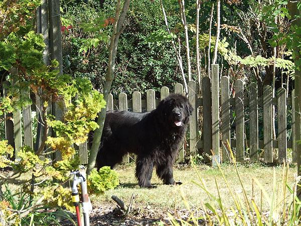 Ferienhaus Fehmarn Garten Hunde
