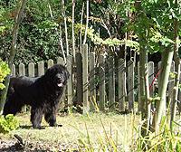 Hund willkommen Ferienhaus Fehmarn