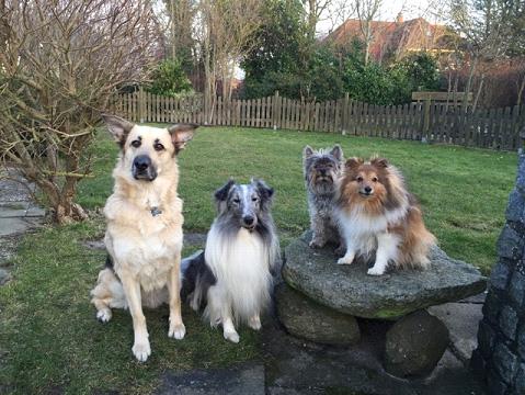 Ferienhaus Fehmarn mit Hund im Februar 2015