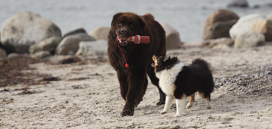 Hundeurlaub Wulfen Fehmarn